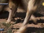 Тәуелсіздік пен «Қазақ» көшіне - 25 жыл  толуына орай «Көш және Көшбасшы» атты ауқымды шара өтті