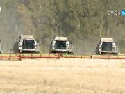 Ақмолалық диқандар биыл 6 миллион тоннаға жуық бидай жинап, рекордтық көрсеткішке қол жеткізді
