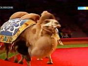 Астана циркі «Жібек жолы» цирк қойылымын ұсынбақ (ВИДЕО)