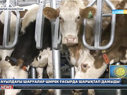Шығыс Қазақстан облысының Қарағайлы ауылында тағы бір сүт қабылдау пункті ашылды