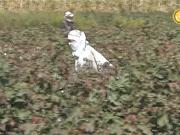 Бүгін 17:55-те «Өткен мен жеткен» арнайы жобасы еліміздегі агроөнеркәсіп кешенінің ахуалы мен дамуына тоқталмақ