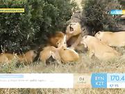 32 арыстанмен арпалысқан африкалық зоолог жайлы не білесіз?