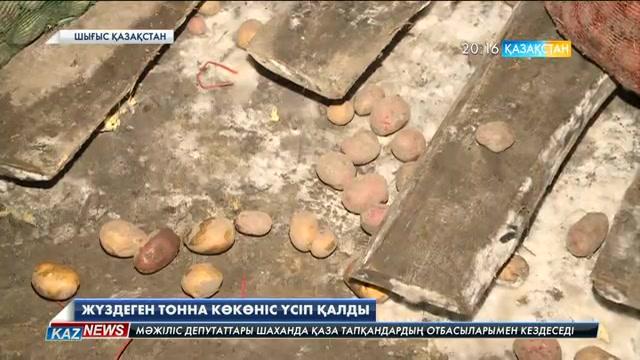 Шығысқазақстандық шаруалардың өнімі қар астында қалды