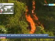 Чилиде орман өрті 400 мың гектар аумақты шарпыды