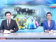 Шығыс Қазақстан облысында шаруалар ет өнімдерін экспорттай алмай отыр
