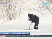 Шығыс Қазақстан облысында жоғалған 4 балықшы табылды