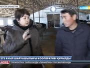 ОҚО-да 70 мыңнан астам ұсақ шаруа қожалығы бар