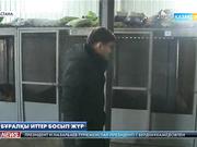 Астанада бұралқы иттер көбейіп барады