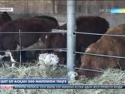 Шығыс Қазақстан облысында ауыл шаруашылығын дамытуға берілген 300 млн. теңге шетел асып кеткен