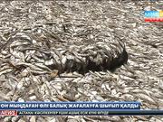Коста-Рикада сардиналарды жеуге тыйым салынды